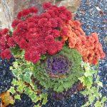 fall mums kale arrangement