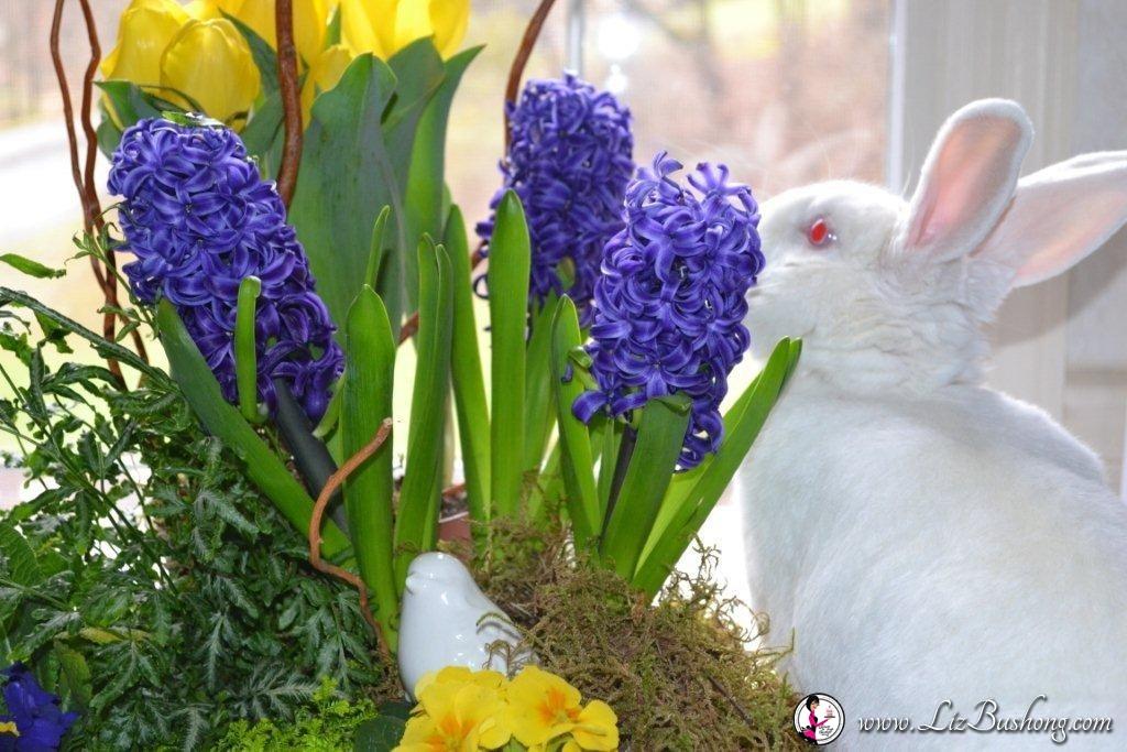 Spring arrangement-JJ niping flower-www.lizbushong.com