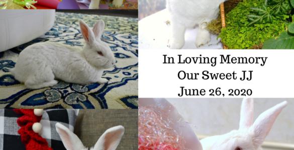 In Loving Memory of Bunny JJ lizbushong.com