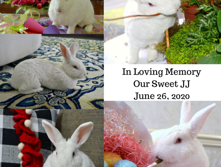 In Loving Memory of Bunny JJ lizbushong.com
