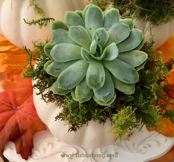 DIY Succulent pumpkins how to make, lizbushong.com