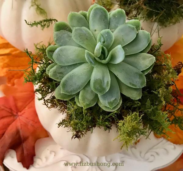 DIY Succulent pumpkins how to make, lizbushong.com