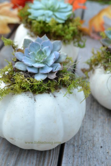 DIY Mini Succulent Pumpkins lizbushong.com