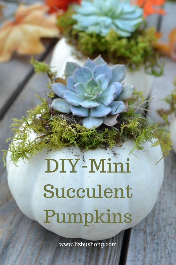 Easy Succulent Pumpkins DIY lizbushong.com