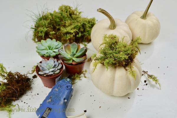 Supplies for mini succulent pumpkins lizbushong.com