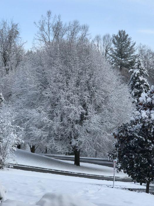 Snow at lizbushong.com