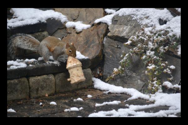 Squirrel stealing bird house lizbushong.com
