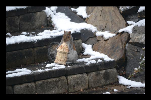Squirrel birdhouse lilzbushong.com