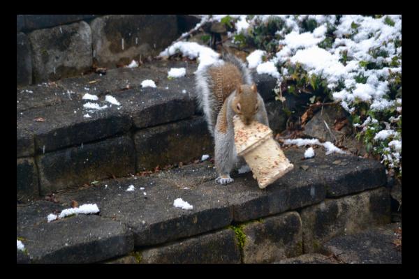 Squirrel birdhouse lizbushong.com