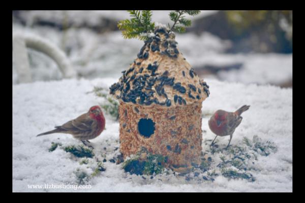 Cute Bird House with Feeding Birds, lizbushong.com