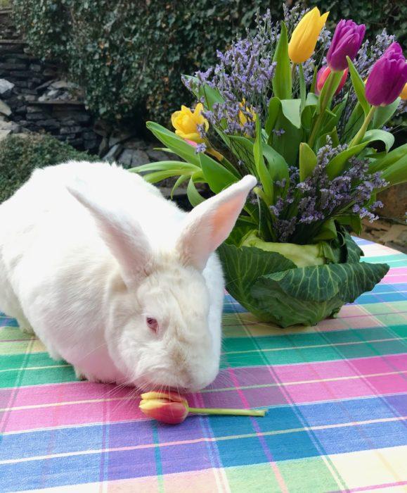 Cabbage vase bunny lizubshong.com