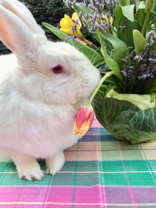 Cabbage Vase with Baby Girl bunny lizbushong.com