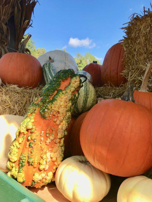 Pumpkin Patch pumpkins lizbushong.com